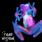 Frank Leone ft. Saba - Toad Vision Artwork