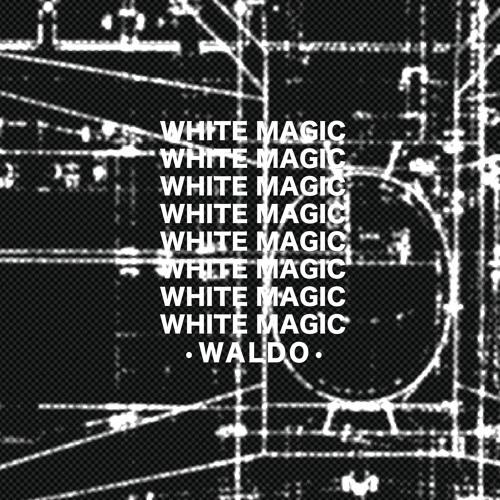 08236-waldo-white-magic